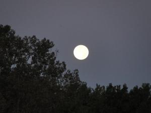 Copy of Creepy Moon